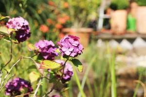 Garten11