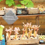 Garten13