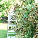 Garten8
